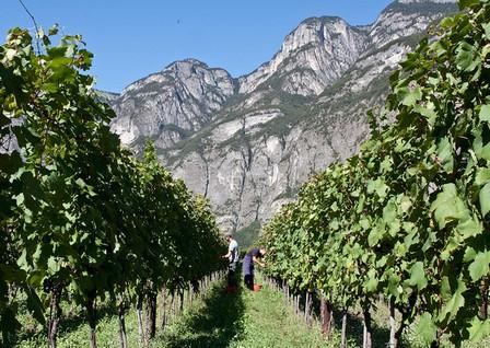 Alto Adige2