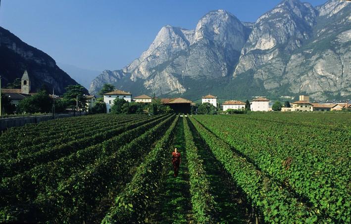 Alto Adige1