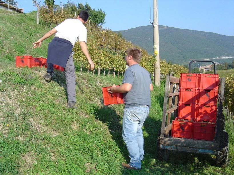 Friuli1