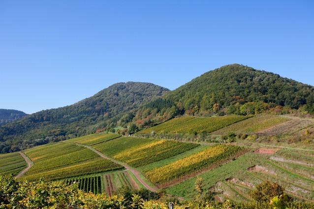 אזורי היין גרמניה